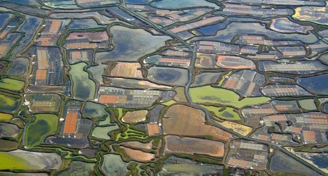 Marais salants de Guérande